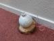 witte kerstbal op houten plankje